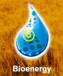 World Congress of Bioenergy