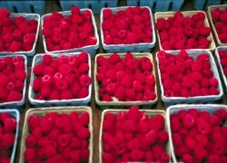 C14 analysis raspberry ketone